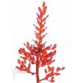 Bromélia 'Aechmea fulgens 'red coral''