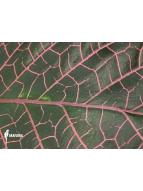 Album Araflora Galerie de photos