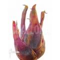 Bromélia Bromeliad species Duida