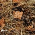 Cocos bark and husk (flora bark)