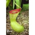Coupe du singe 'Coupe du singe 'Nepenthes ventricosa' 'Art vogel'
