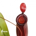 Coupe du singe 'Nepenthes' x 'Bloody mary'