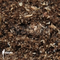 Peat and spaghnum potting mix (5 litre)