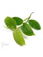 Album Plantes de terrarium