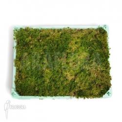 Sphagnum moss Cradle