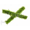 Vesicularia dubyana 'Java mousse' sticks